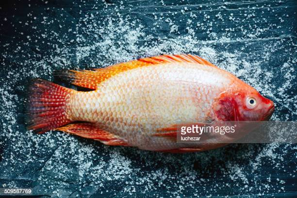 fresh ocean perch - perch fish stock pictures, royalty-free photos & images