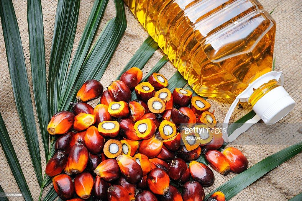 Fresh oil palm fruits : Stock Photo