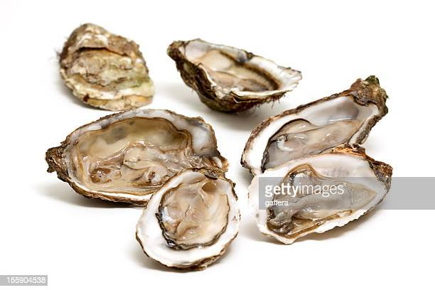 fresh open oysters isolated on white  - oyster shell stock photos and pictures
