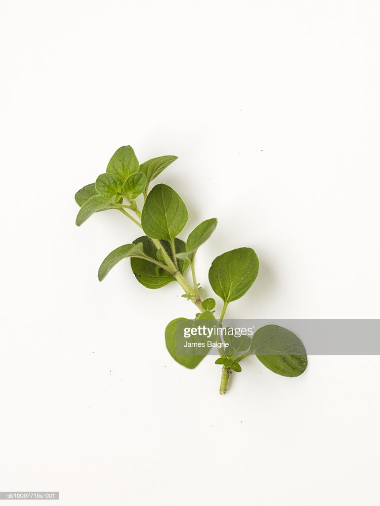 Fresh oregano on white background : Stock Photo