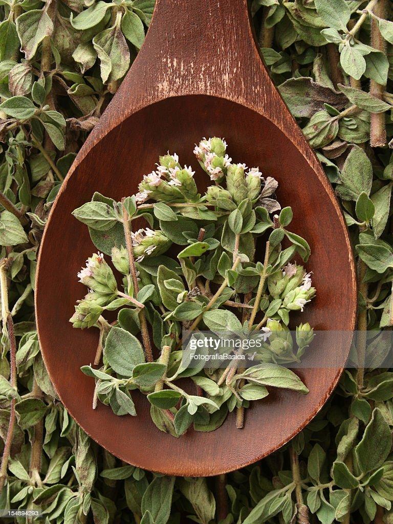 Fresh oregano : Stock Photo