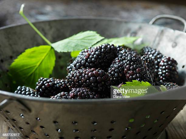 fresh organic fruit, blackberries in colander with green leaves - blackberry fruit stock pictures, royalty-free photos & images