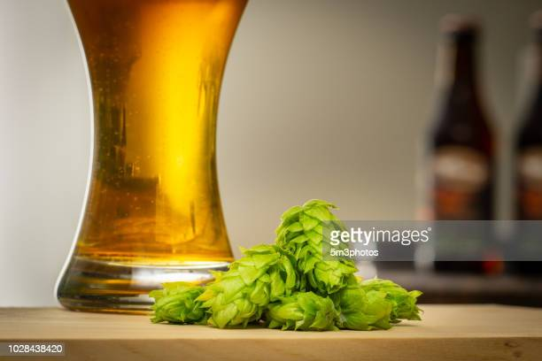 fresh organic hops and glass of beer with copy space - help:ipa stock pictures, royalty-free photos & images