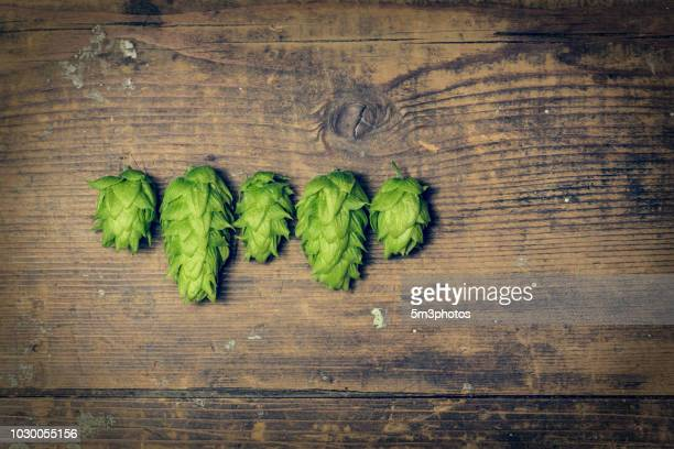 fresh organic hops with copy space - help:ipa stock pictures, royalty-free photos & images