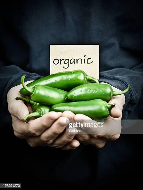 Fresh Organic Jalapeno Peppers