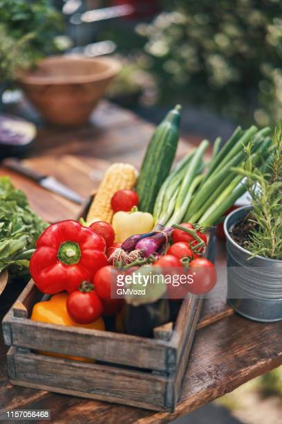 fresh organic summer vegetables - vegetable stock pictures, royalty-free photos & images