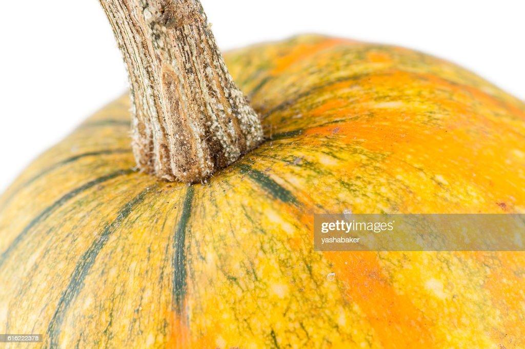 Fresh organic yellow decorative pumpkin : Stockfoto