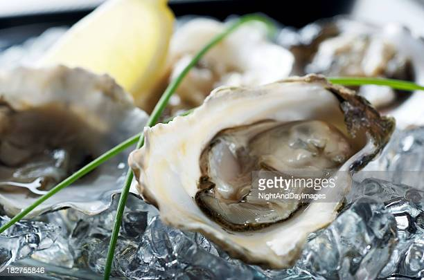fresh oyster platter - oyster shell stock photos and pictures