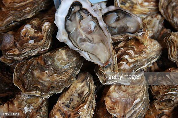 fresh oysters for sale