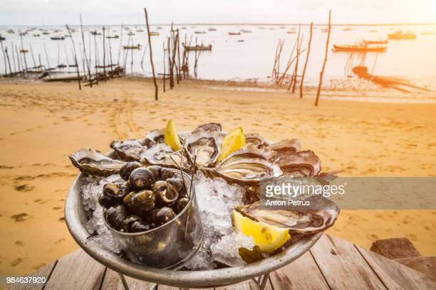 Fresh oysters on ice with lemon on the beach