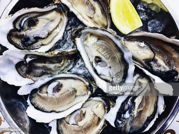 fresh oysters on the plate - cultura portoghese foto e immagini stock