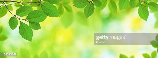 Frische Blätter Panoramablick