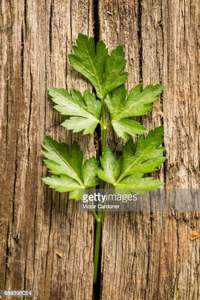 Fresh parsley on a wooden table