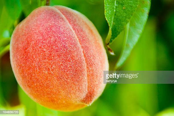 fresh peach - peach tree stock pictures, royalty-free photos & images