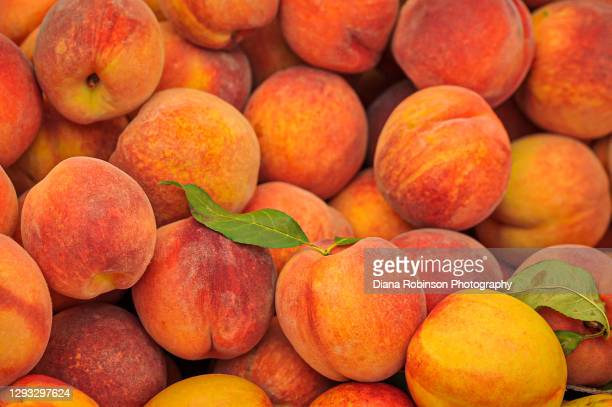 fresh peaches on display at the mercato di rialto along the grand canal in venice, italy - venice italy stock pictures, royalty-free photos & images
