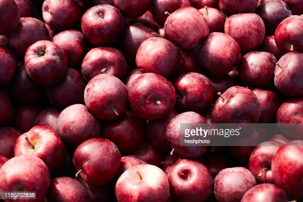 fresh picked apples - heshphoto stock pictures, royalty-free photos & images