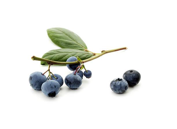 fresh picked blueberries on a stem - 藍莓 個照片及圖片檔