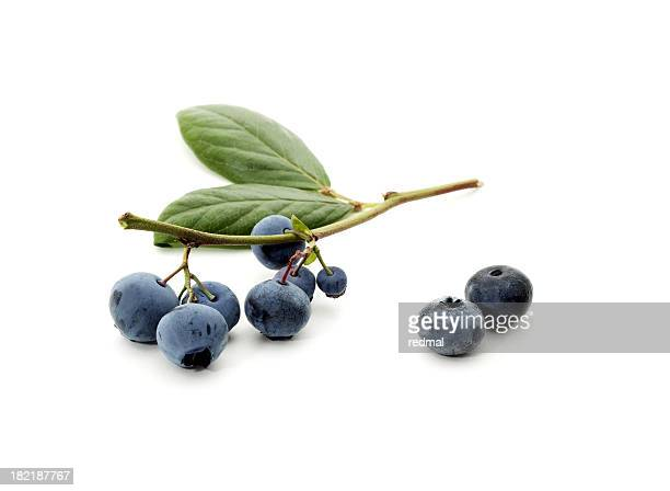 Fresh picked blueberries on a stem