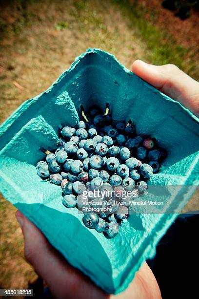 fresh picked blueberries - vanessa van ryzin 個照片及圖片檔