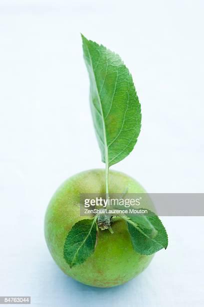 Fresh picked organic apple, close-up