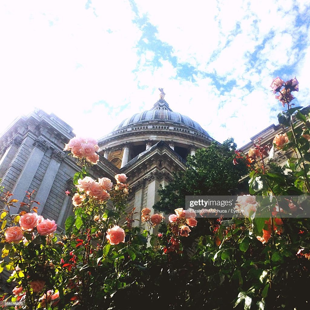 Fresh Pink Roses In Front Of St Paul Cathedral Against Sky : Stock Photo