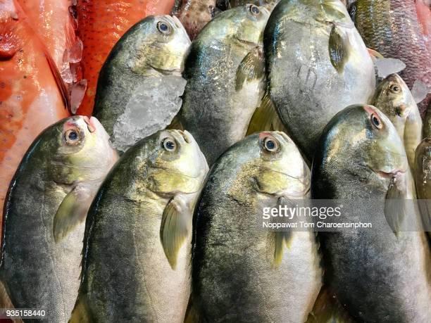 fresh pomfret, bangkok, thailand - mercury metal stock-fotos und bilder