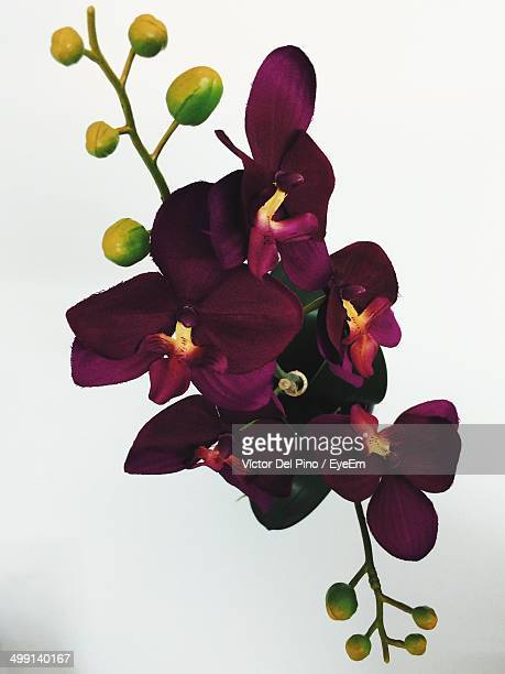 Fresh purple orchids over white background