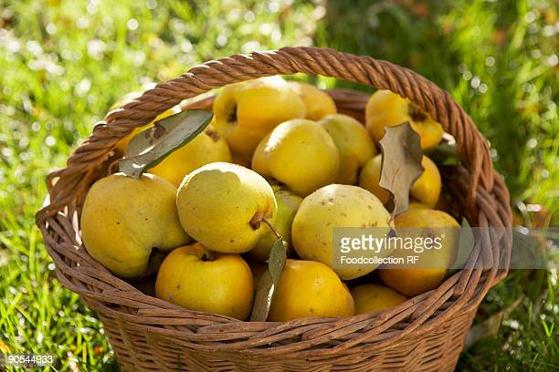 Fresh quinces in basket, close up