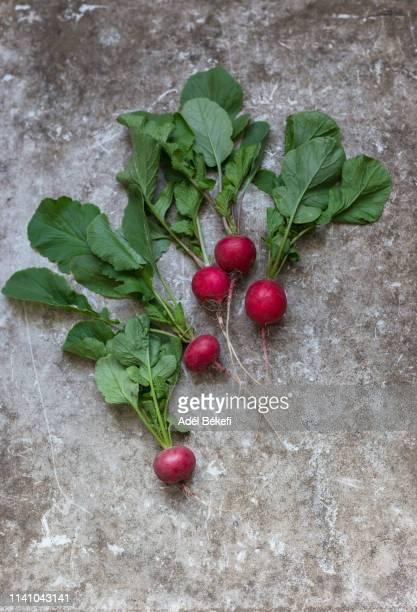 fresh radishes - ramo parte de uma planta imagens e fotografias de stock