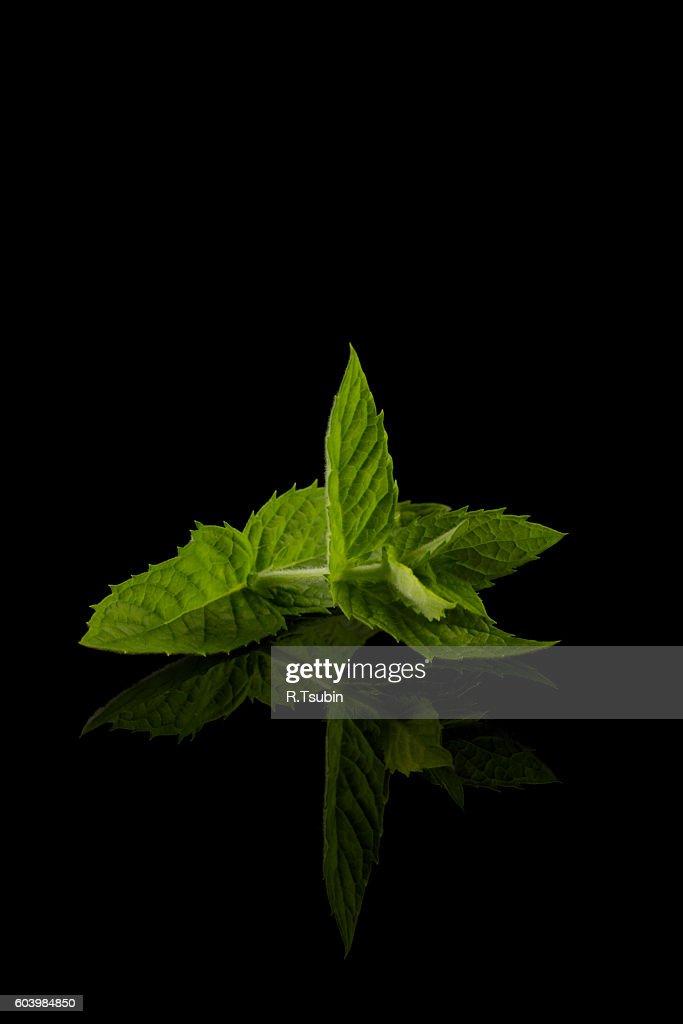 Fresh raw mint leaves : Stock Photo