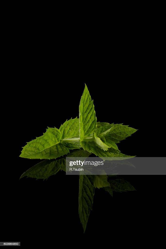Fresh raw mint leaves isolated on white with reflection