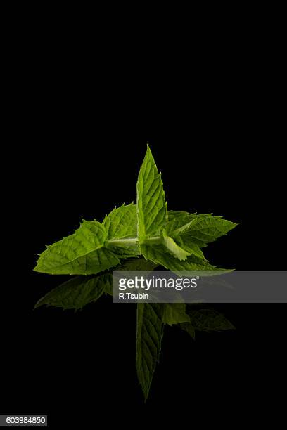 Fresh raw mint leaves