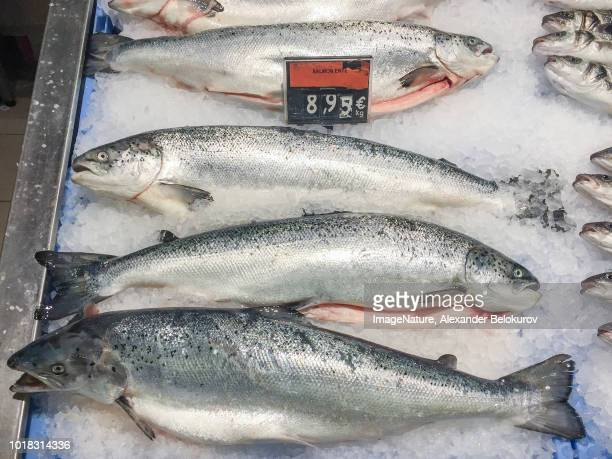 fresh raw salmon fish  for sale  at local market in ibiza, spain - storage compartment stock pictures, royalty-free photos & images