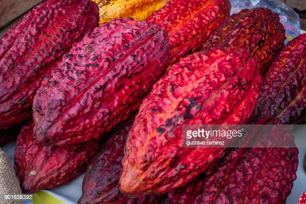 fresh red cocoa fruits