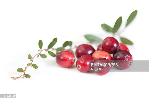 Fresh Red Cranberry Fruit and Leaves