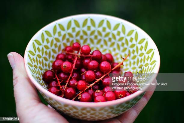 fresh red currants - gregoria gregoriou crowe fine art and creative photography ストックフォトと画像