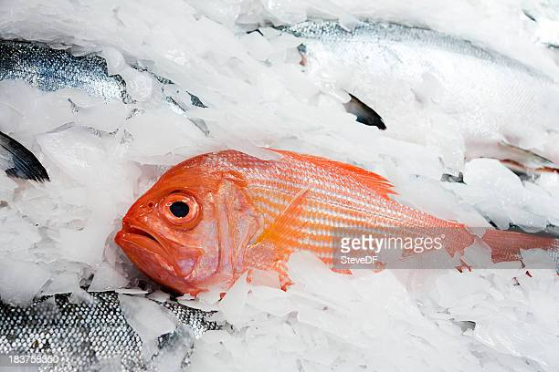 Fresh Red Snapper on Ice