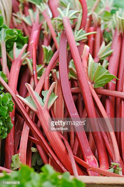fresh rhubarb at the farmer's market - rhubarb stock photos and pictures