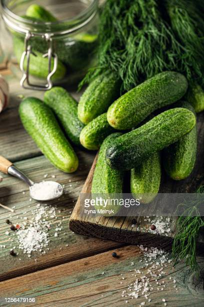 fresh ripe green small cucumbers, garlic and dill herbs for the preparation of pickles. healthy vegetable food concept with copy space. - sal de cozinha - fotografias e filmes do acervo