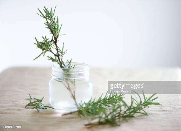 fresh rosemary herb in glass jar. - dougal waters stock pictures, royalty-free photos & images