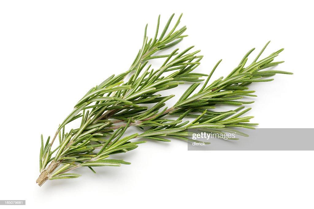 Fresh Rosemary Isolated on White : Stock Photo