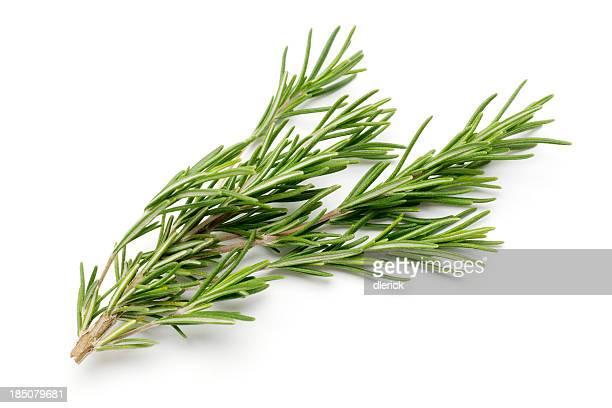 Fresh Rosemary Isolated on White