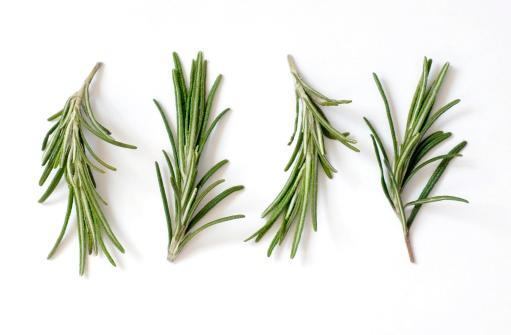 Fresh Rosemary (Rosmarinus officinalis) on White 172806250