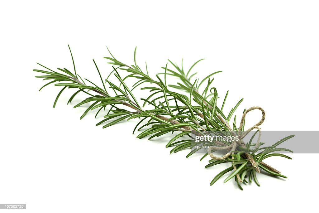 Fresh rosemary sprigs tied with twine at the base : Stock Photo