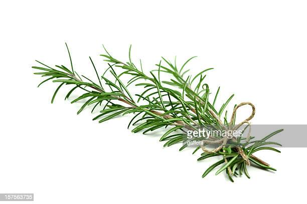 fresh rosemary sprigs tied with twine at the base - twijg stockfoto's en -beelden