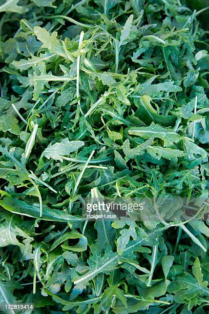 Fresh rucola salad leaves for sale at market