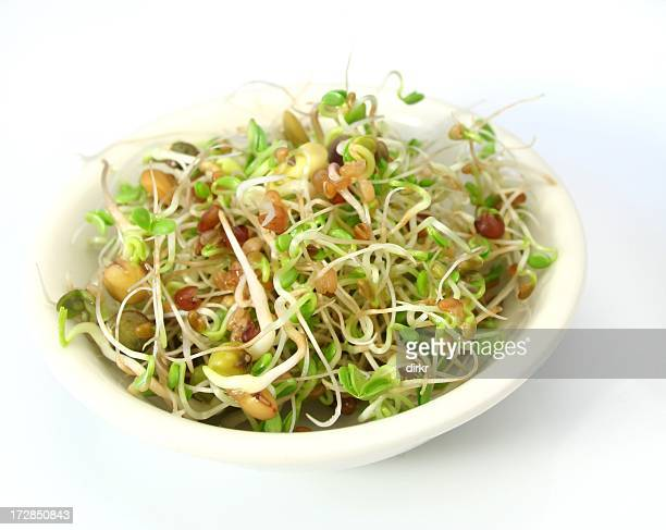 Fresh salad mixed with germ buds and bean shoots