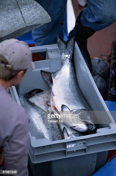 Fresh Salmon at the Fish Market