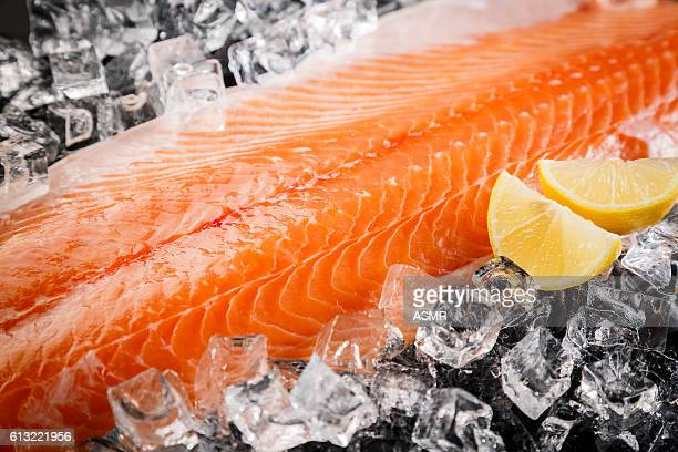 Fresh Salmon Fish  on the Black Background