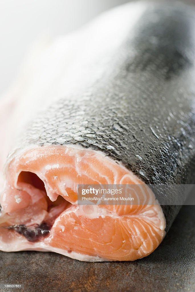 Fresh salmon : Stock Photo